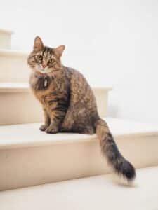 croquettes françaises pour chat