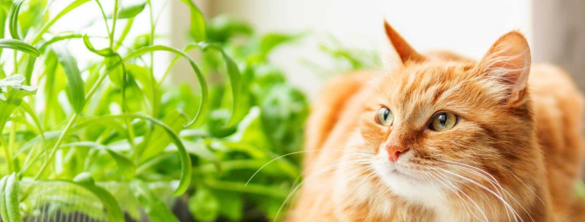 Read more about the article Système digestif du chat : comment fonctionne-t-il ?