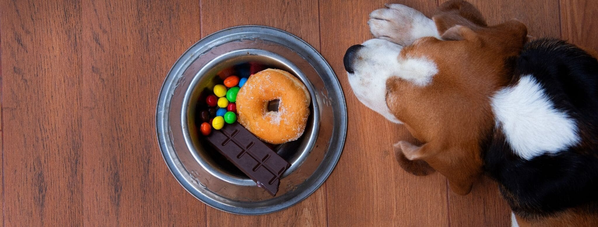 Read more about the article Sept aliments interdits aux chiens