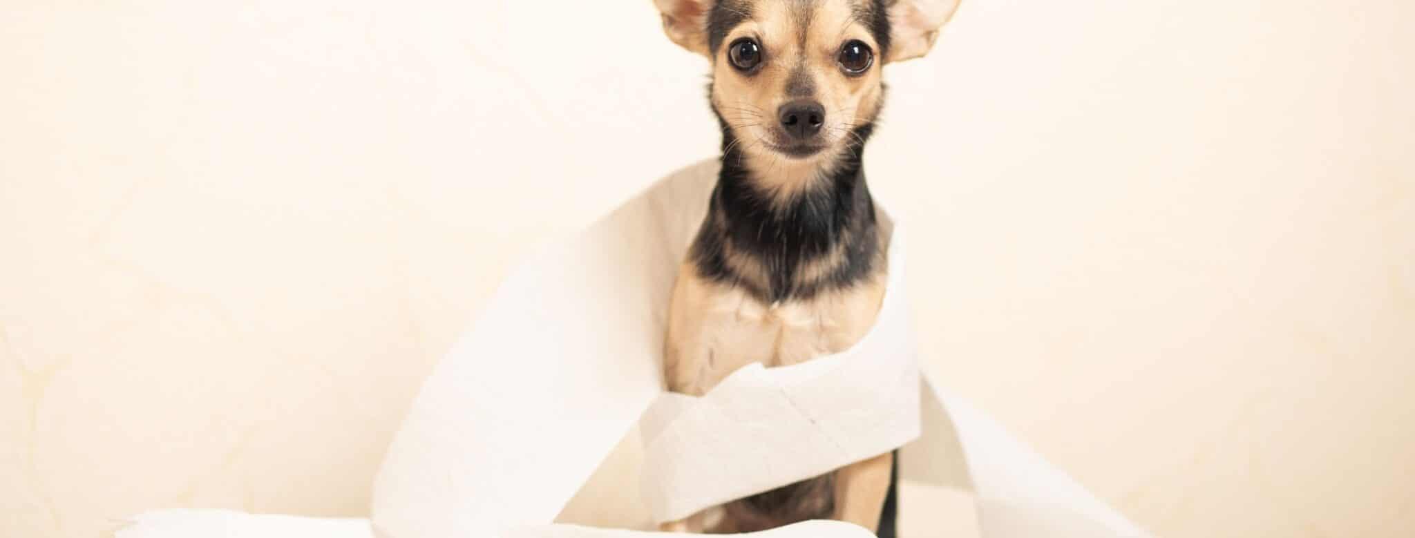Read more about the article Système digestif du chien : comment fonctionne-t-il?